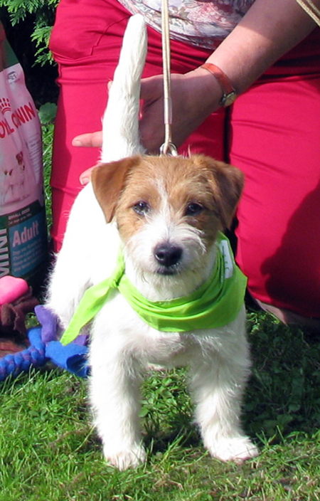 Dolcenera Armonia Canina - Jack Russel Terrier
